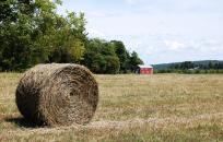 Bail of Hay in a Field