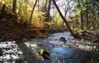 Creek through woods